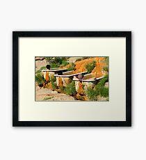 desert soak Framed Print