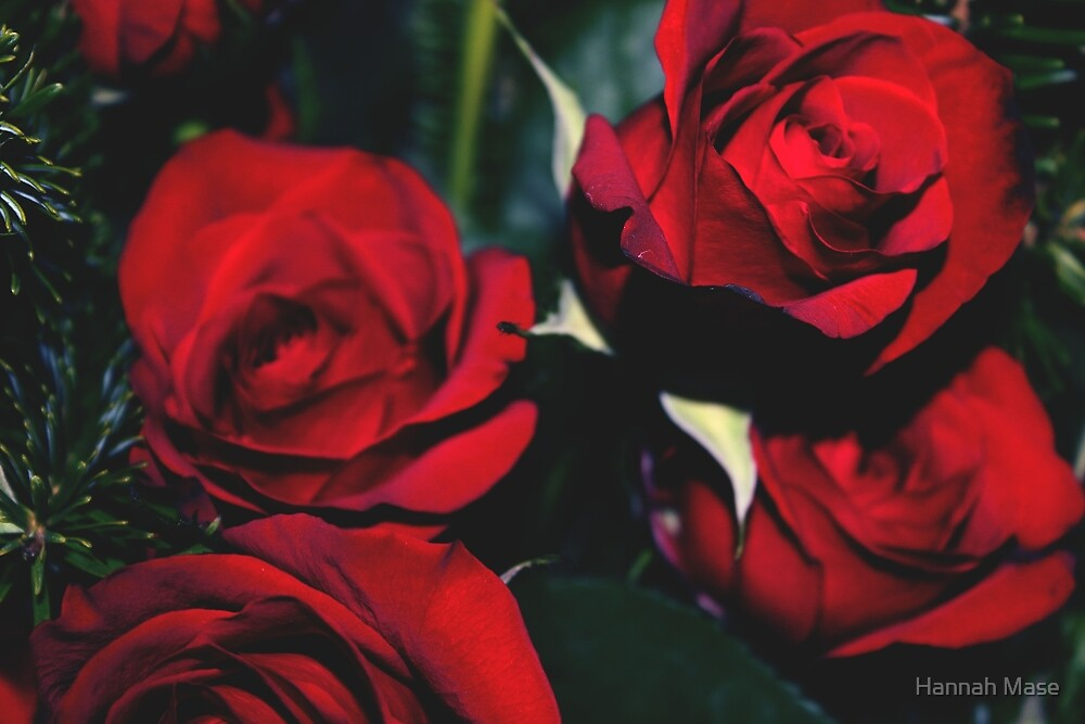 Red Roses by steelyhan