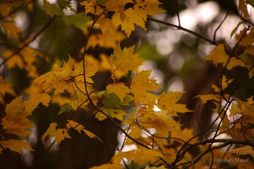 Yellow Autumn Leaves by steelyhan
