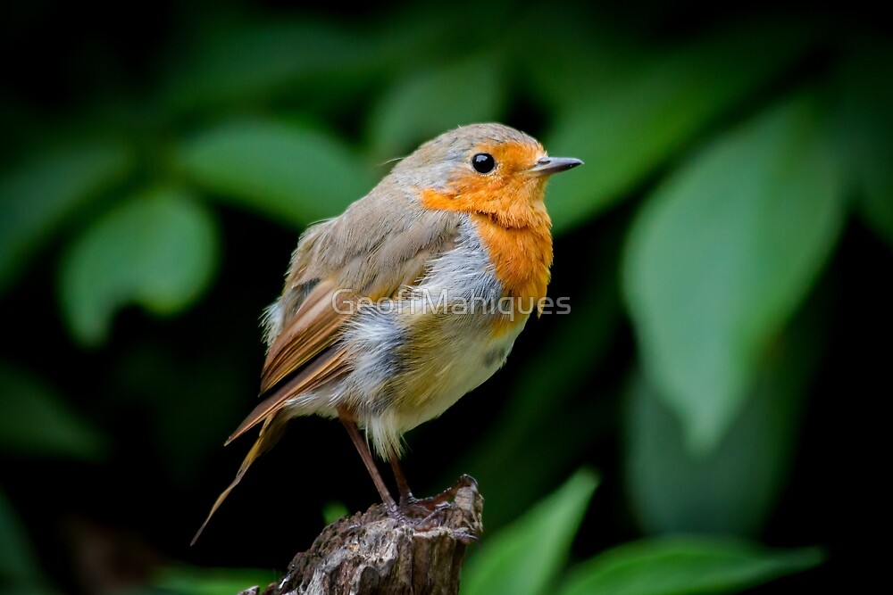Robin posing for a shot by GeoffMahiques