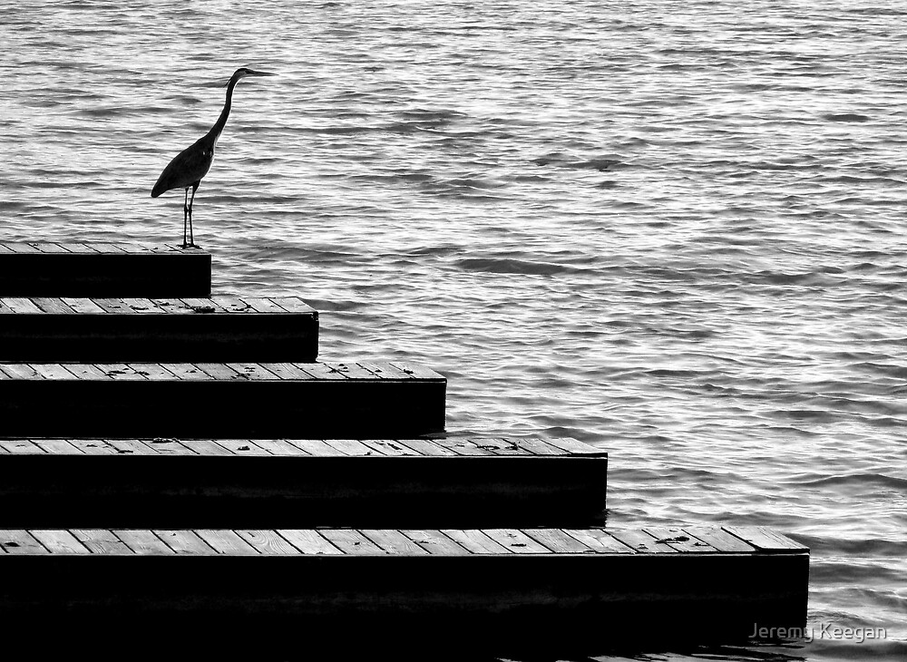 Heron on the docks by Jeremy Keegan