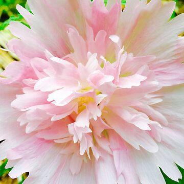Pink Hollyhock by BindysBags