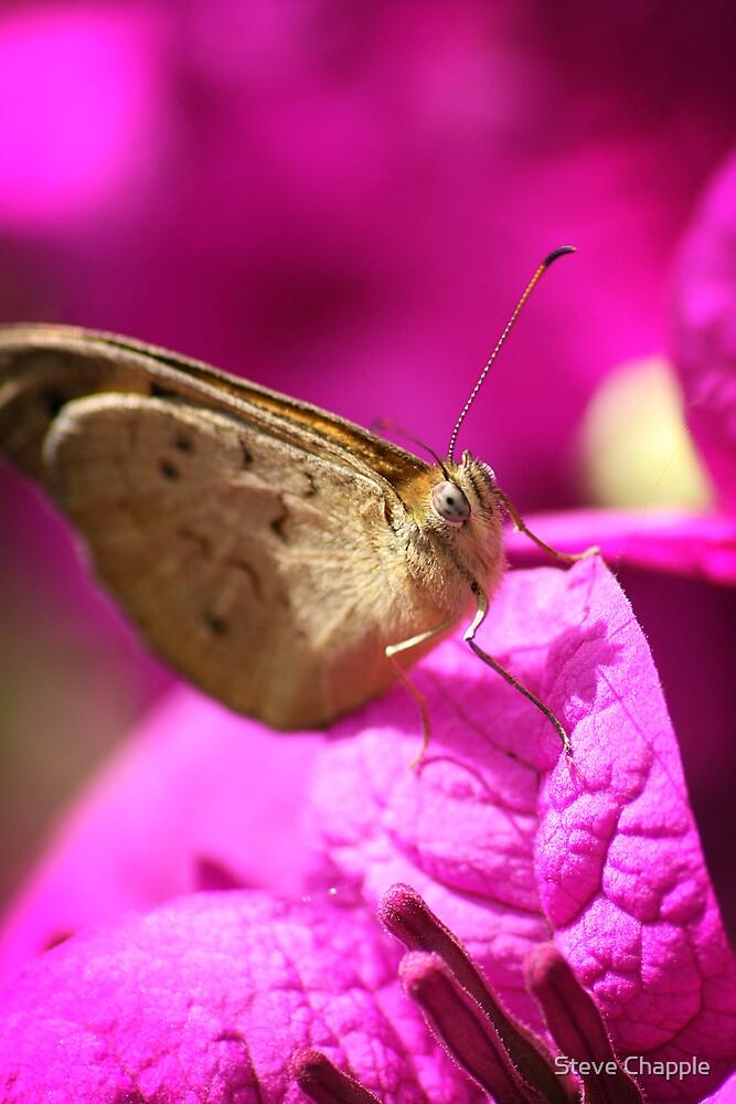 Butterfly Bliss by Steve Chapple