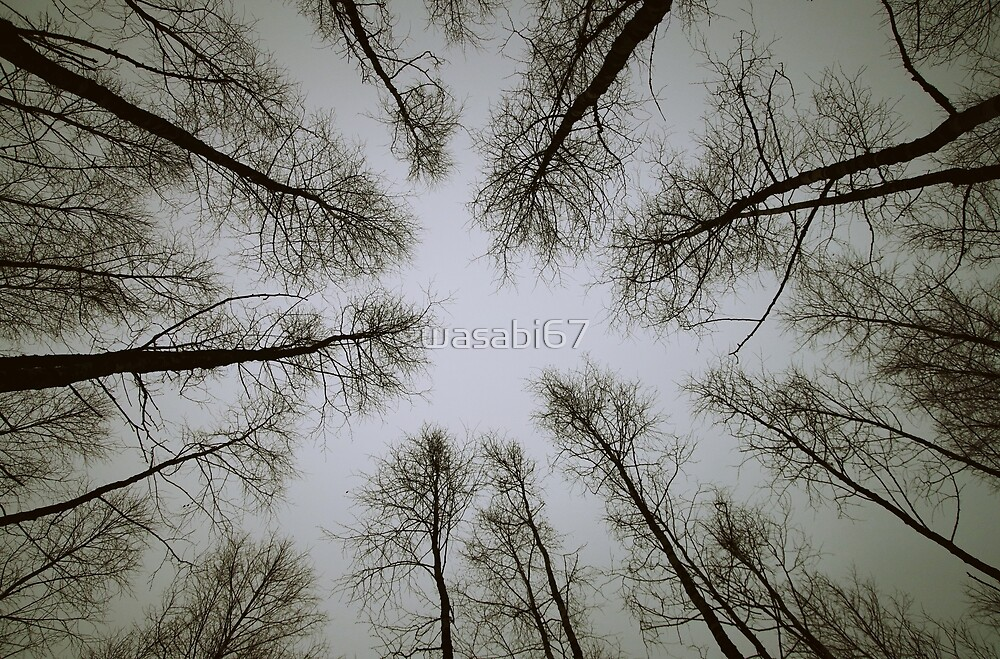 Concentric Trees by wasabi67