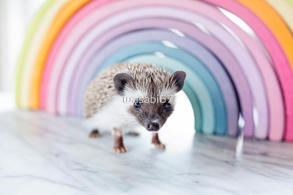 Baby Hedgehog by wasabi67