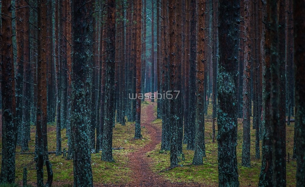 Path Through Tall Forest by wasabi67
