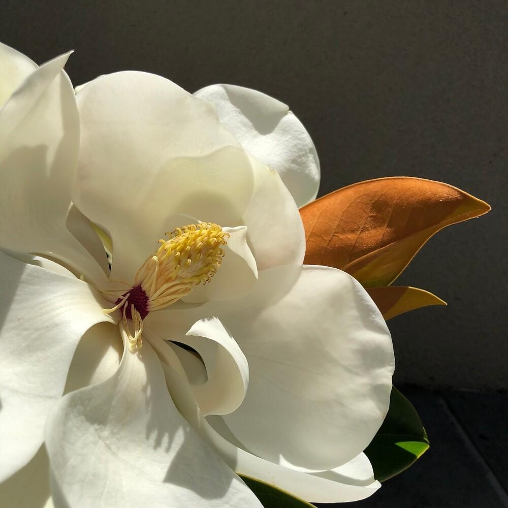 Magnolia by Katecdart