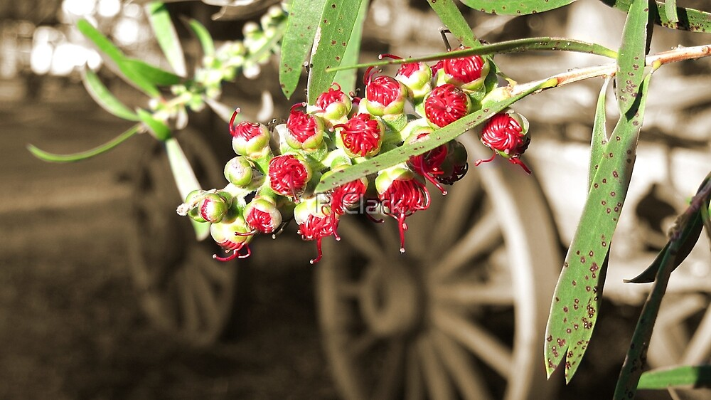Bottle brush and wagon by R Clark
