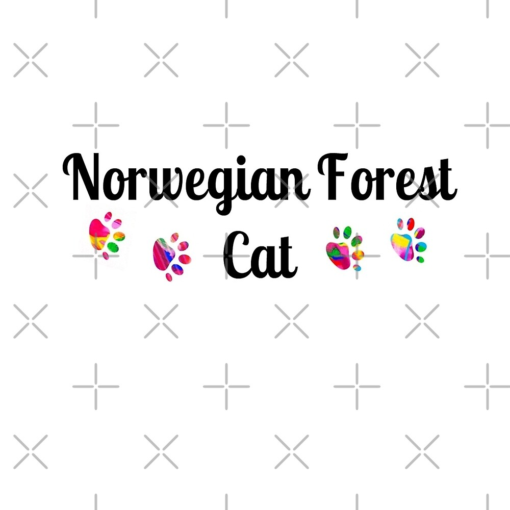 Norwegian Forest Cat - star quality by myfavourite8