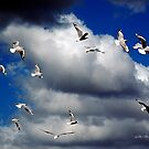 Windsailing Seagulls © Vicki Ferrari Photography by Vicki Ferrari