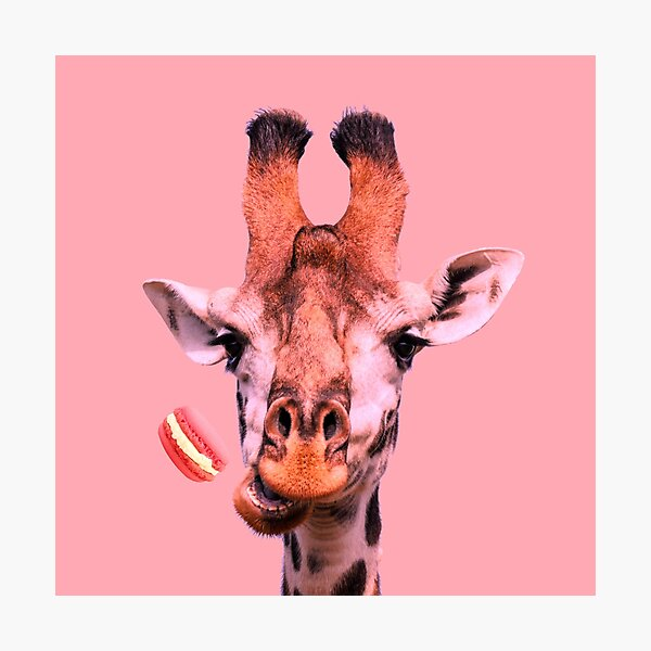 Lovely giraffe with macaron by Alice Monber Photographic Print