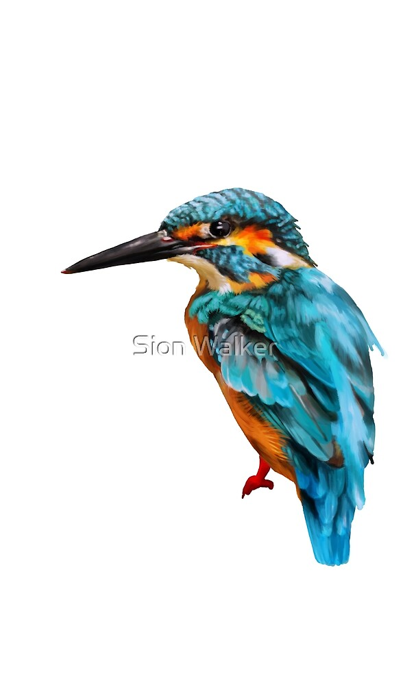 kingfisher painting no background by Sion Walker