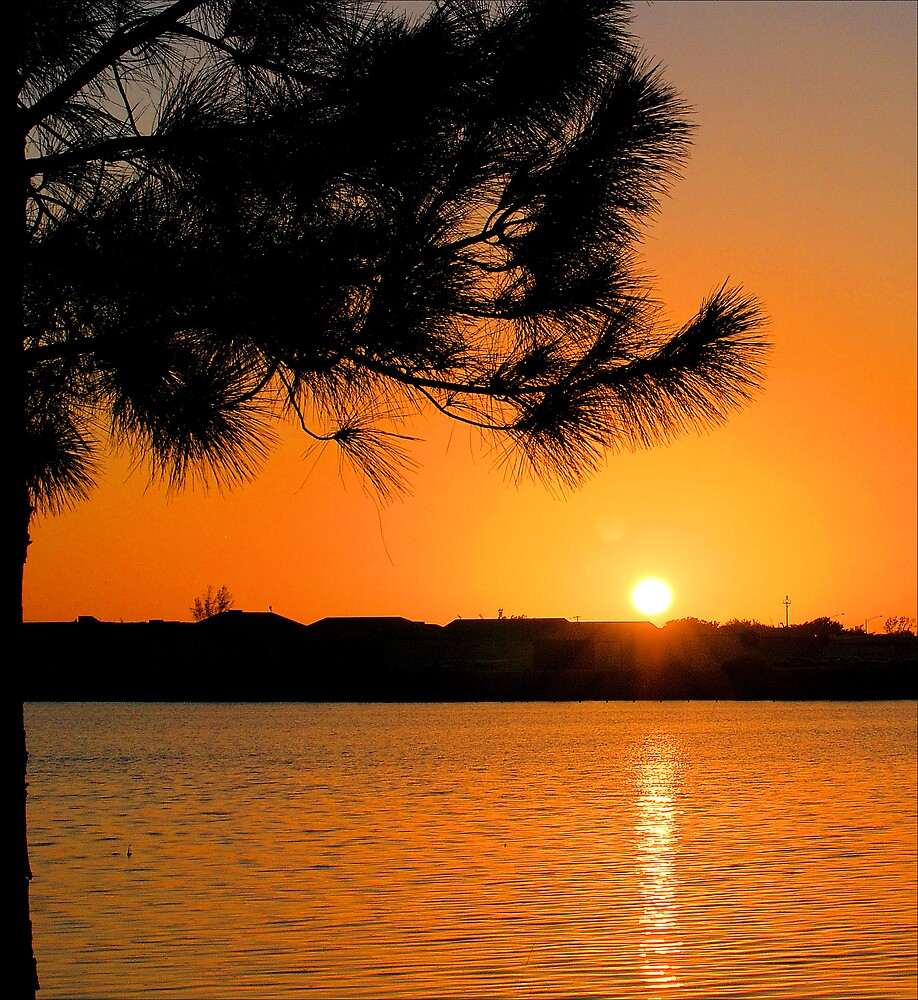 Sunset in the Pine by Donnie Shackleford