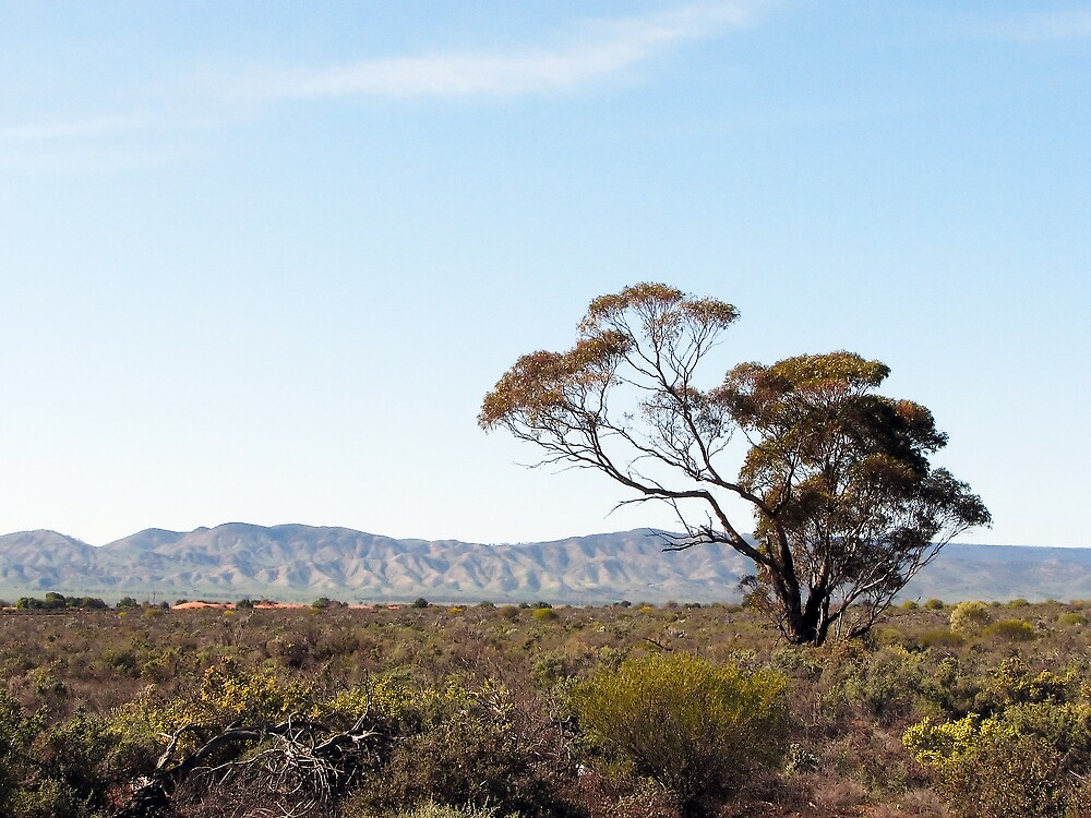 Flinders Ranges by DaveLambert