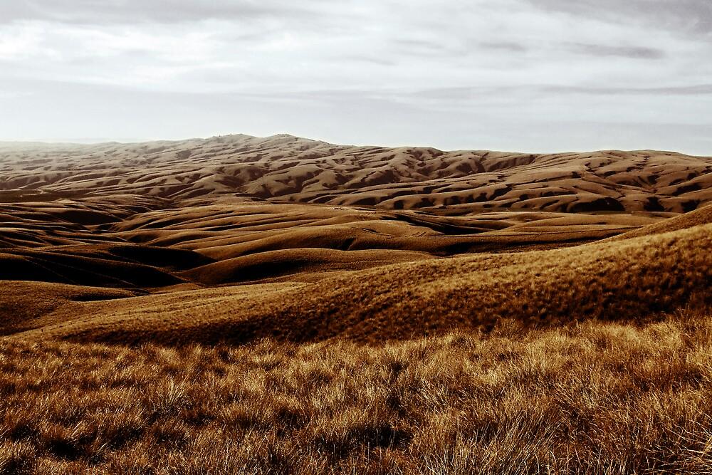 Otago, NZ by AlisonOneL