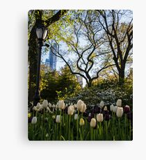 Springtime Tulips in Central Park New York City Canvas Print