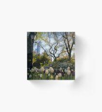 Springtime Tulips in Central Park New York City Acrylic Block