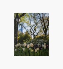 Springtime Tulips in Central Park New York City Art Board