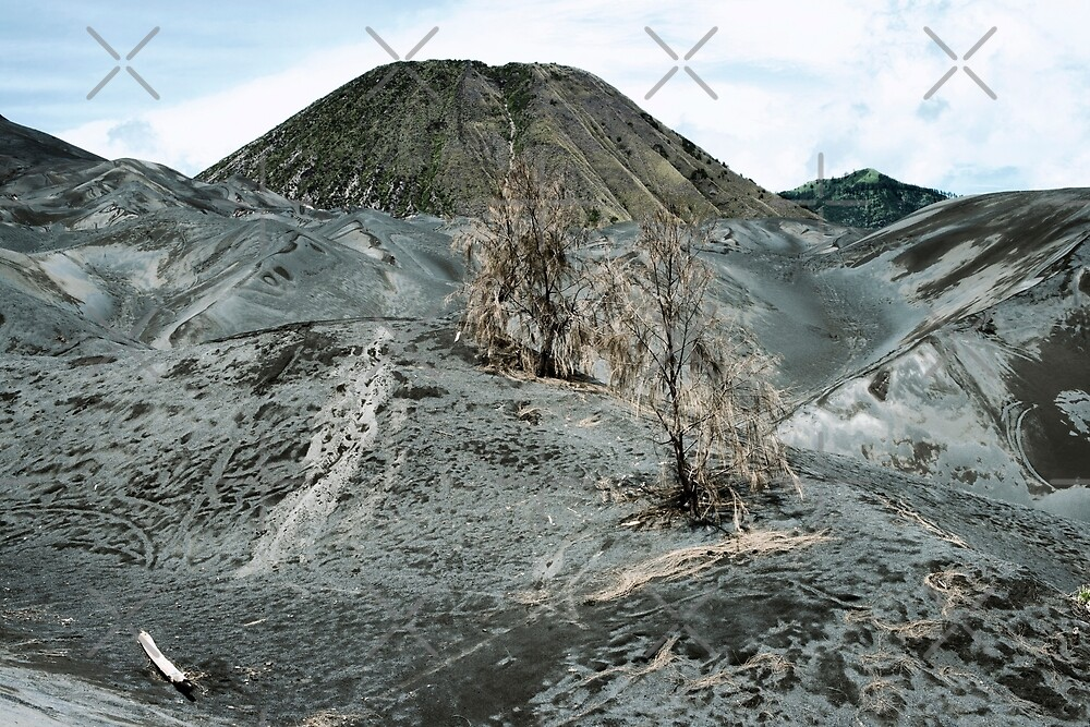Arid landscape surrounding the active volcano on Mount Bromo, Tengger Semeru, East Java, Indonesia by dani3315