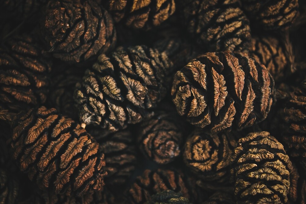Pine cone close up by Walmorn