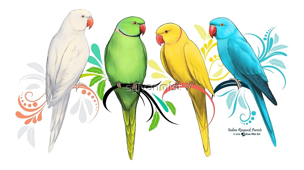 Indian Ringneck Parrots by sylvanmist