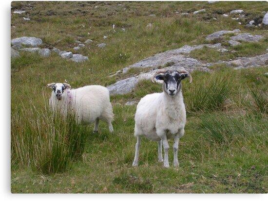 Harris Sheep by lezvee