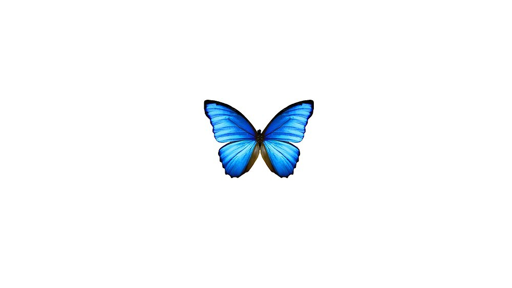BLUE MORPHO  by SIE  in white by sourceindie