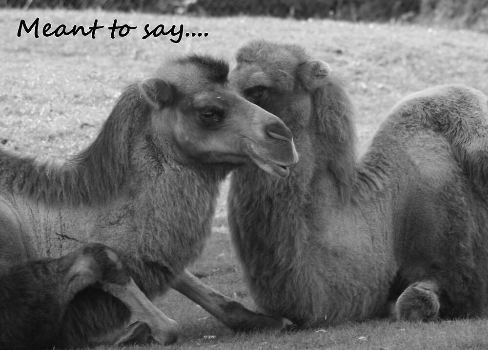 Camel Talk by sjmphotos