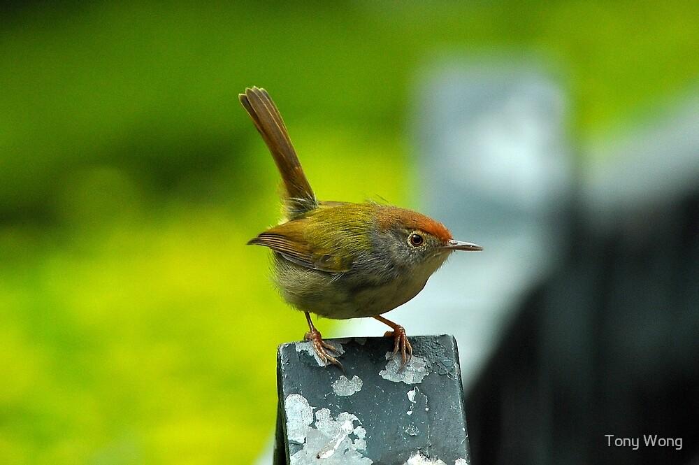 Yellow bird by Tony Wong