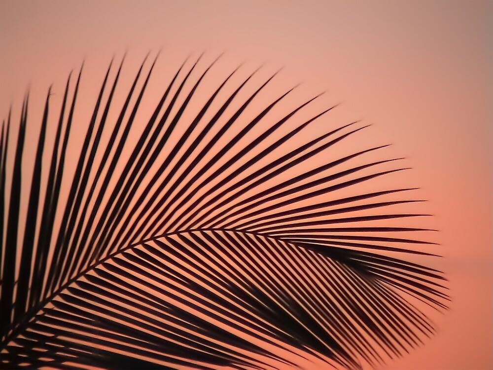 Palm Leaf by Eric Nagel