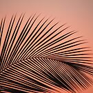 Palm Leaf by Eric Nagel