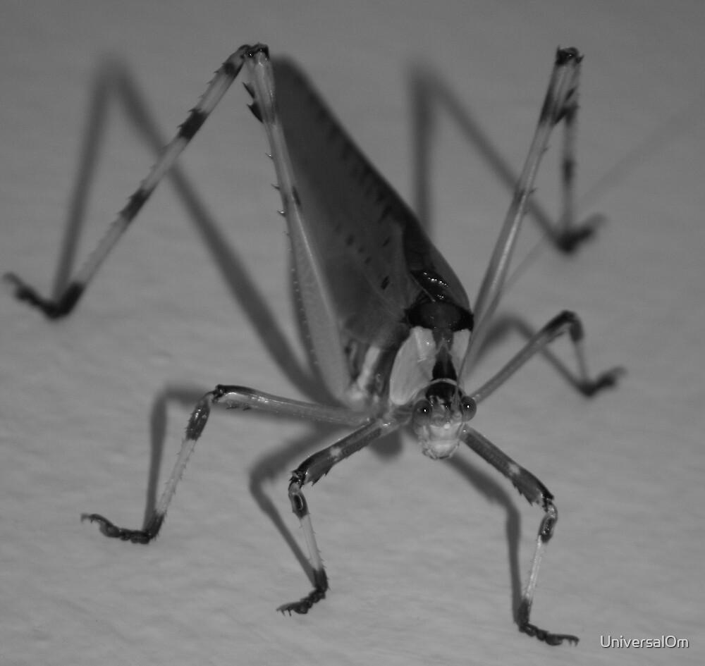 Cricky Cricket by UniversalOm