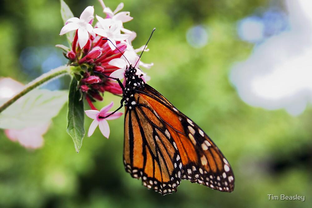 Monarch Flower by Tim Beasley