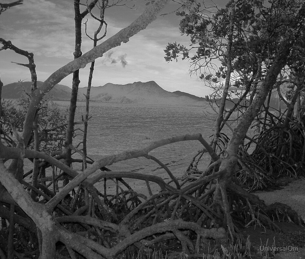 Hinchenbrook Mangroves by UniversalOm