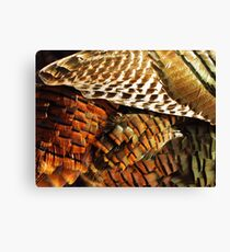 Wild Turkey Feathers  Canvas Print