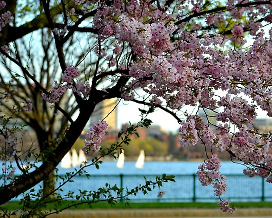 A spring day on the Charles River by WayneOxfordPh