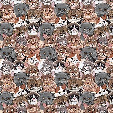 Gatos sociales de Huebucket