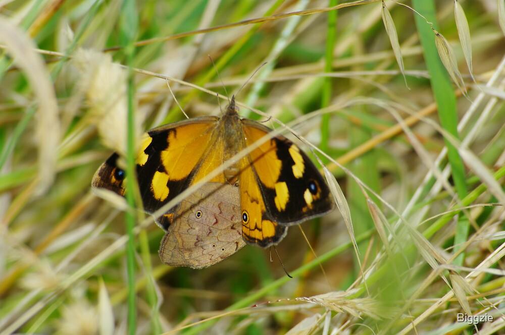 Butterfly Mating Season by Biggzie