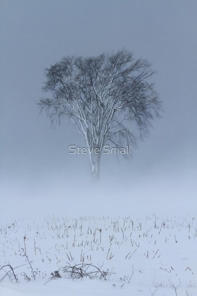Weathered The Storm Alone by Steve Small