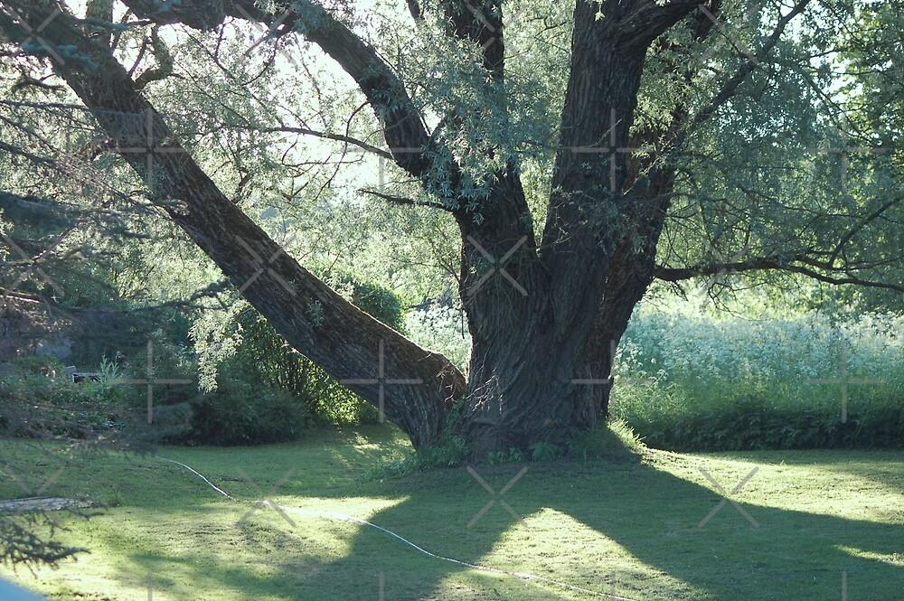 A tree by loiteke