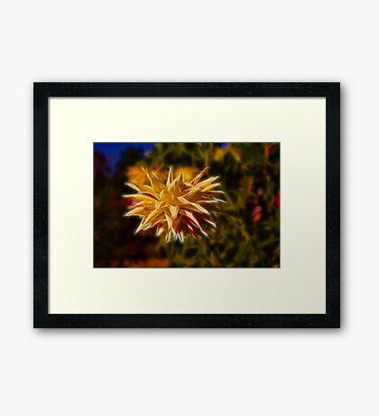 Hanging Dahlia Framed Print