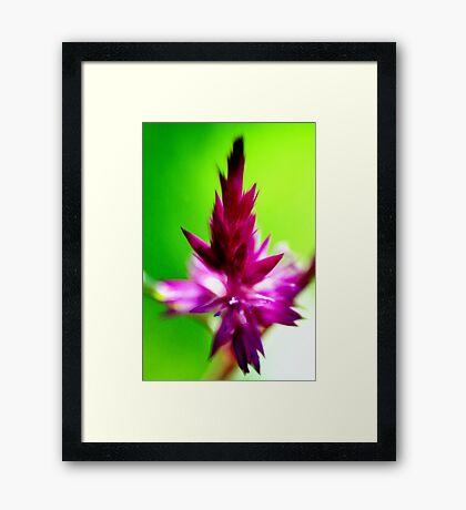 Selosia #1 Framed Print