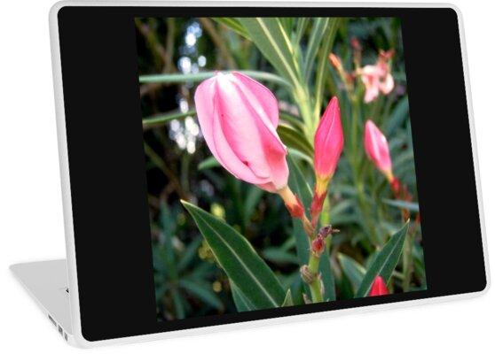 Oleander buds by Shulie1