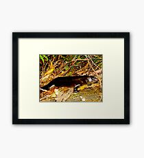 Land Mullet, Framed Print