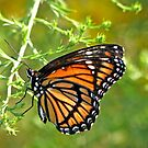Monarch Butterfly ~ Mosiac Wings by Patty Lewis