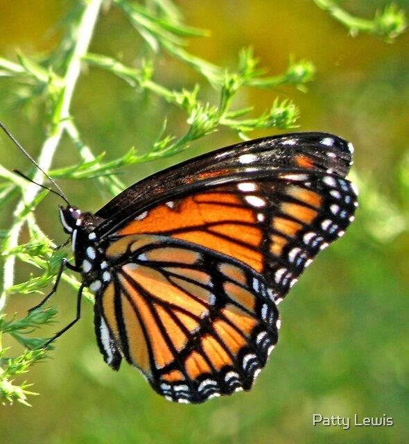 Monarch Butterfly ~ Mosiac Wings by Patty Boyte