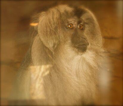 The Thoughtful Monkey. by VenturAShot