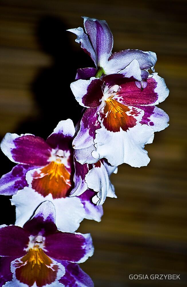 orchidea by GOSIA GRZYBEK