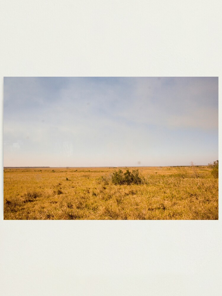 Alternate view of Louisiana Fields Photographic Print