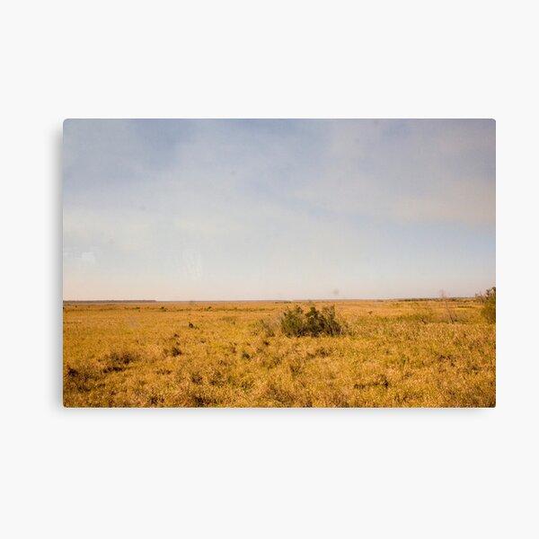 Louisiana Fields Canvas Print